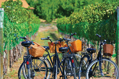 cruiser bikes- vineyards