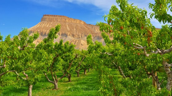 MtGarfield.Orchard-560x313